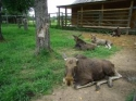 Сумароковская лосиная ферма